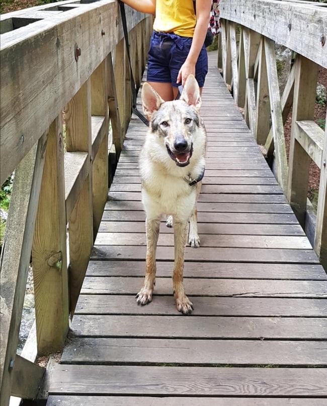 chien qui fait une randonnée en savoie au cirque de saint-même