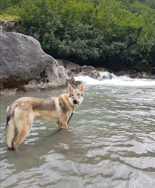 chien qui randonne au barrage de la gittaz