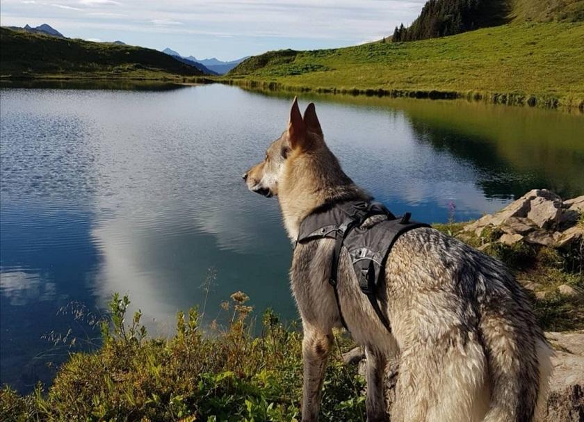 randonnée avec chien croix du berger