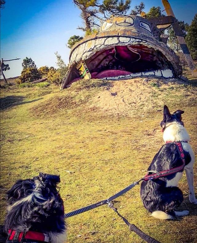 site du bego avec chien