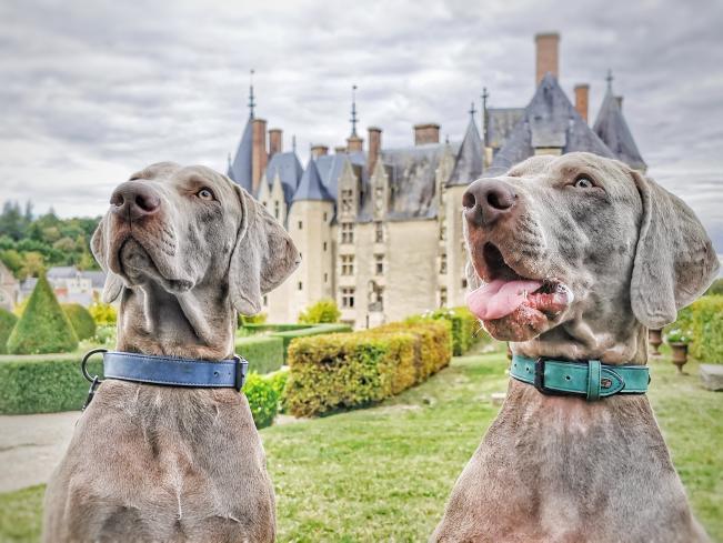 château de langeais avec chien