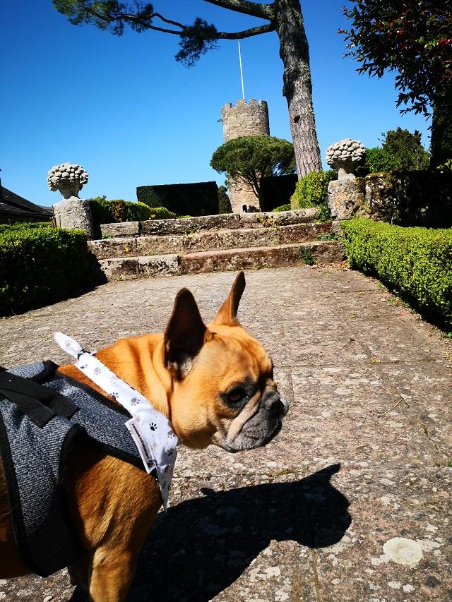 chien qui visite le château de turenne