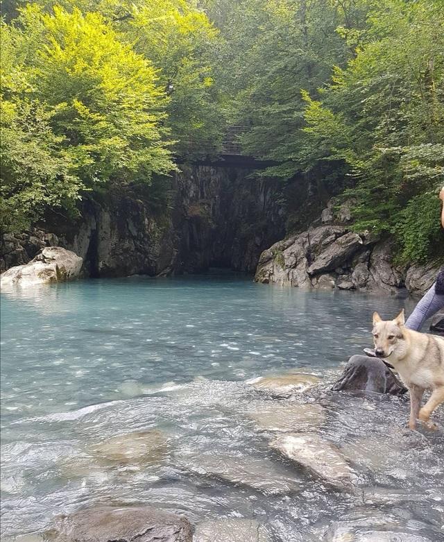 randonnée avec chien gorges de tines haute-savoie