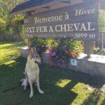 vacances avec chien haute-savoie sixt fer à cheval