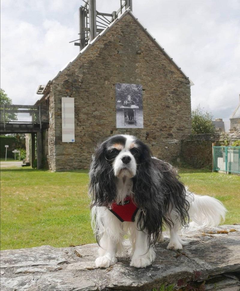 la route du lin avec chien
