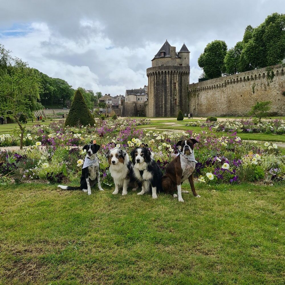 visiter vannes avec un chien
