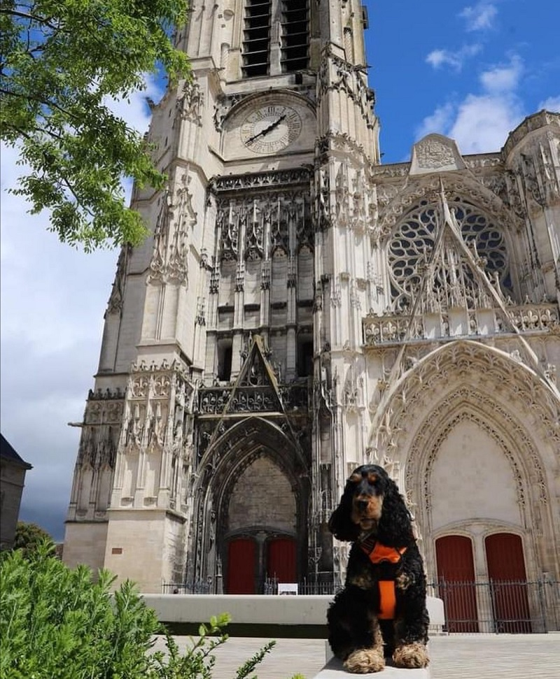 tourisme avec mon chien aube
