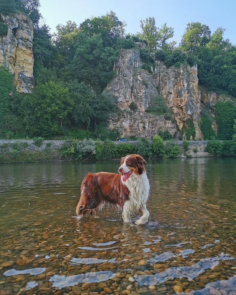 Baignade avec chien Dordogne