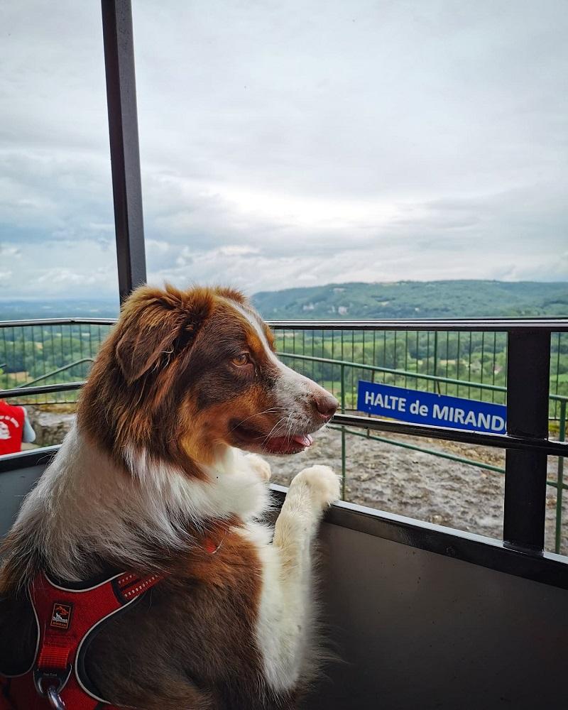 Chemin De Fer Touristique Haut Quercy avec chien