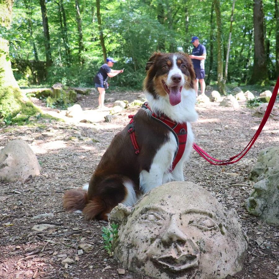 chien qui visite les jardins de marqueyssac