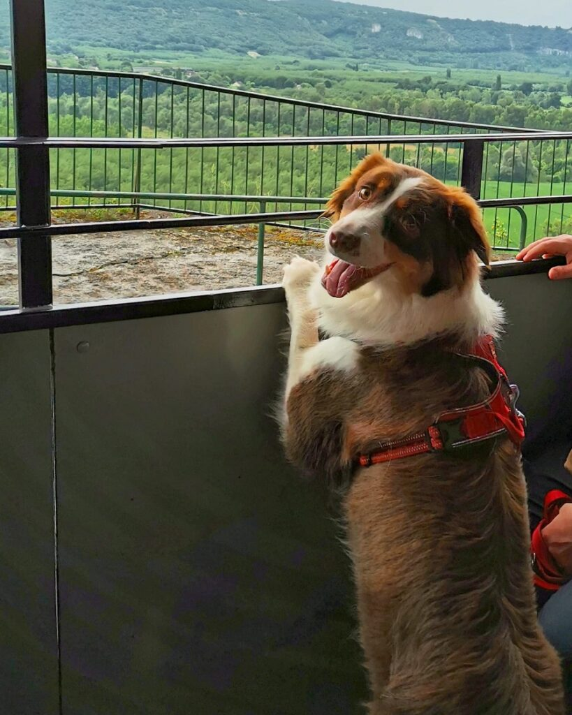 train touristique haut quercy avec chien