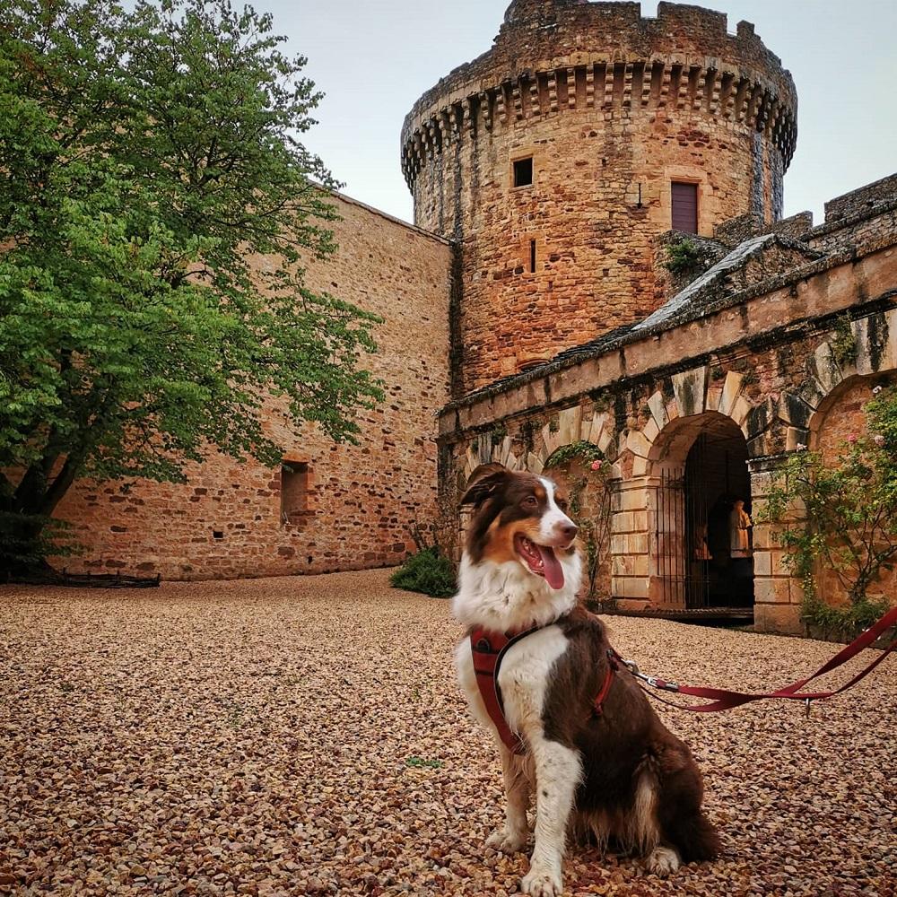 visite du château de castelnau-bretenoux avec chien
